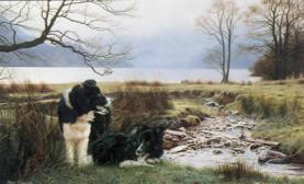 Steven Townsend, Working Pair-Border Collies